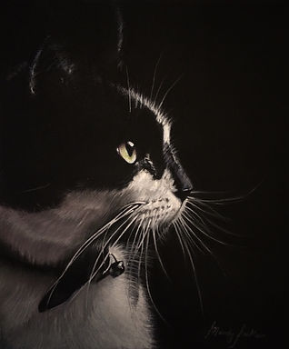 Black & White Cat Pet Portrait