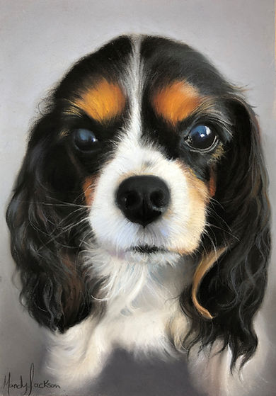 Cavalier King Charles Spaniel. Pet portrait in Pastel