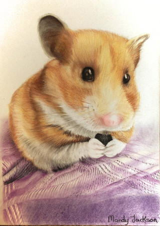 Hamster pastel portrait