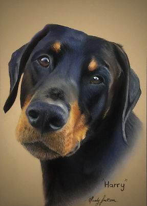 Doberman Pet portrait