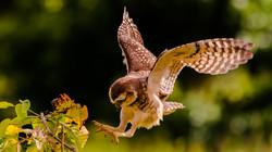 Aterrissando