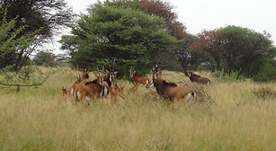 Game farm for sale - Sable Antelope
