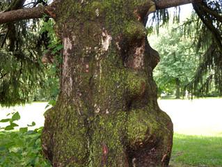 Faerie Tree Wizard - Wishes of JOY!