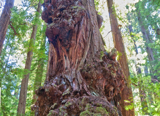 Tree Selfie's