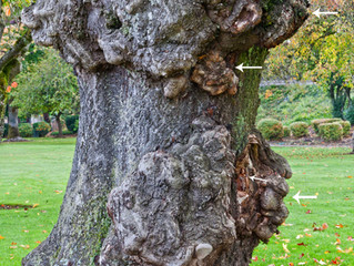 Tree of faces! Dryads are revealed!