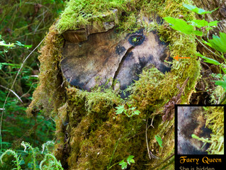 Tree Dryad appears in tree stump with Faerie!