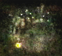 Above/Below Photo: After doing a drum ceremony with Michael Drake and friends we invite in the faeries as we danced around the tree. The faeries also showed up with lanterns, see closeup below!