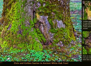 Elvin and Golden Faeries in Tree!