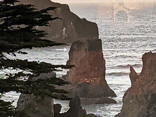 Ancient sea stack rocks reveal consciousness!