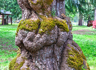 Trees Show Consciousness in Nature!