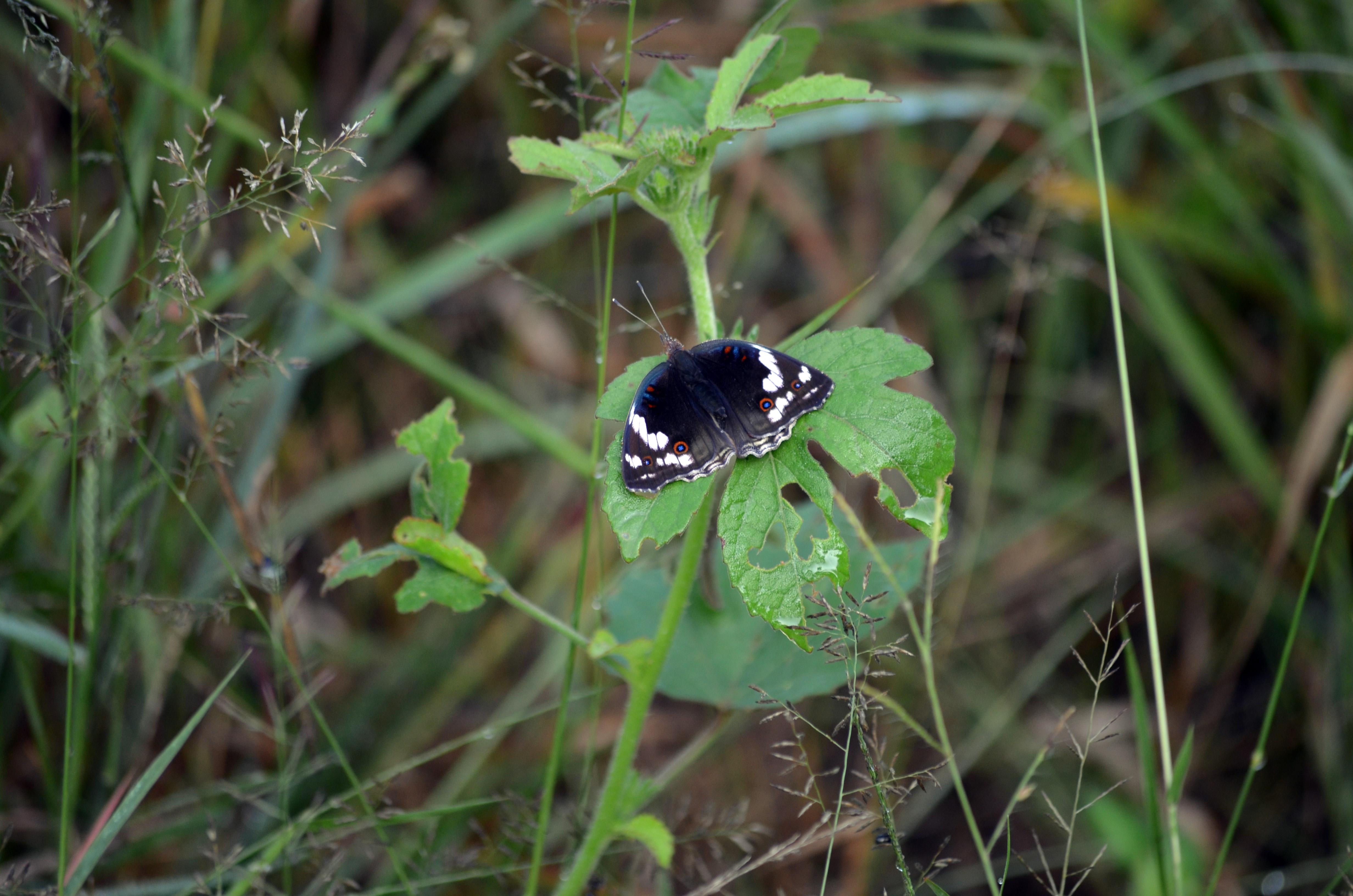 Butterfly 2017