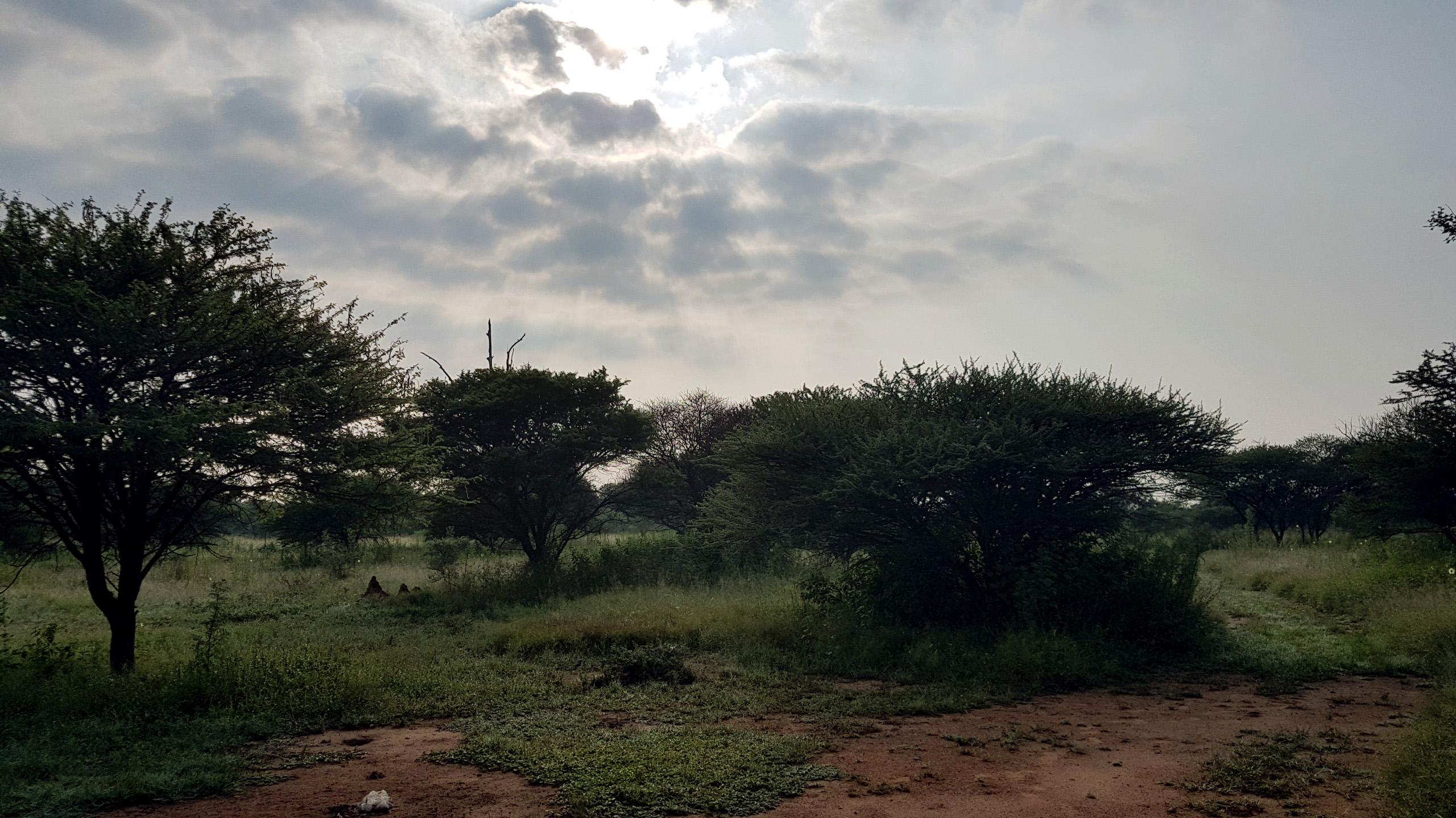 Bushveld 2017