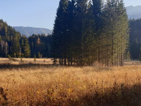 Herbstwanderung zum Pfindsberg