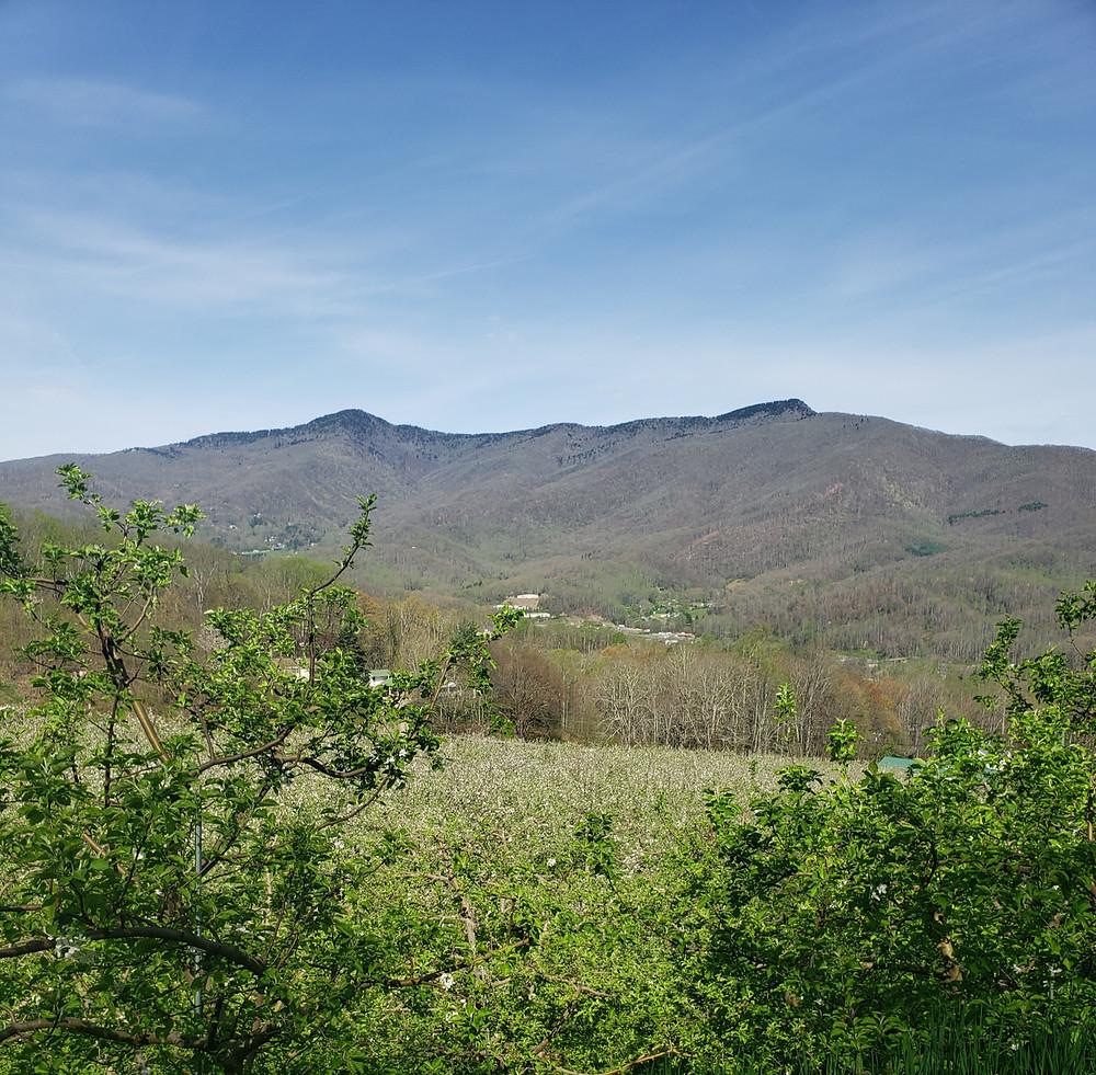 Apple trees overlooking mountains