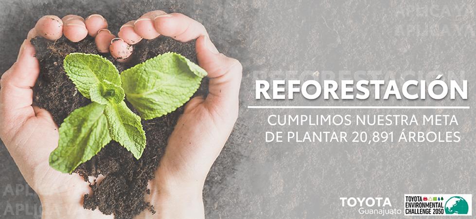 banner reforesta-10.png