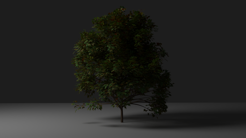 1st tree.png