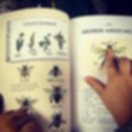 Arının Anatomisi