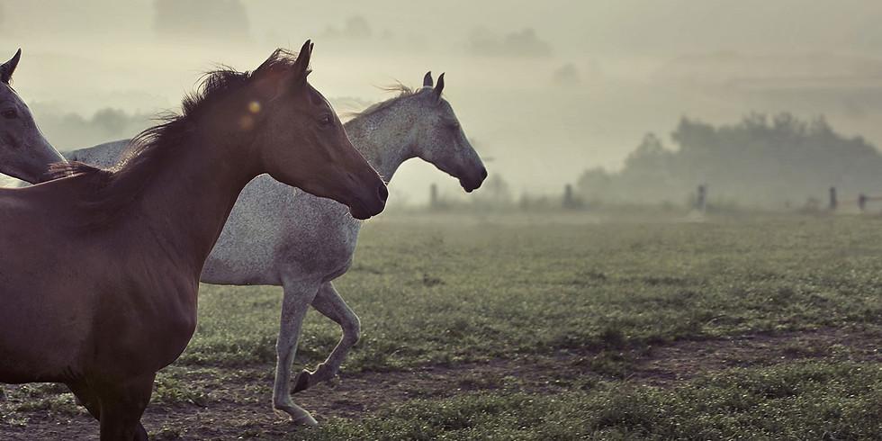 Atlarla Deneysel Öğrenim Programı