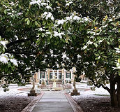 mansion framed by snowy magnolias.jpg