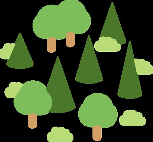 Tief im Wald - ein neuer Baum