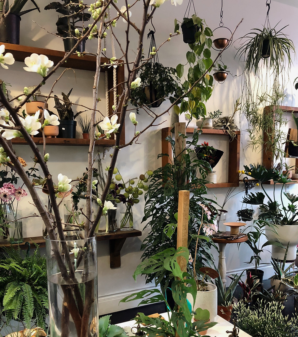 Portland Plant Shop | Sunburn in Seattle