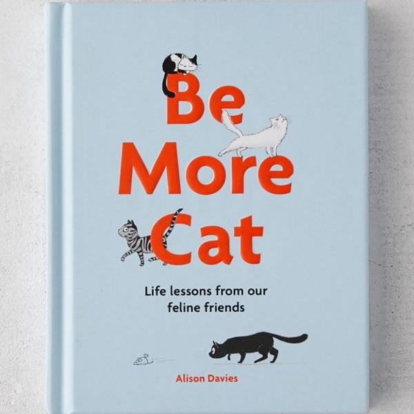 Be More Cat | Sunburn in Seattle