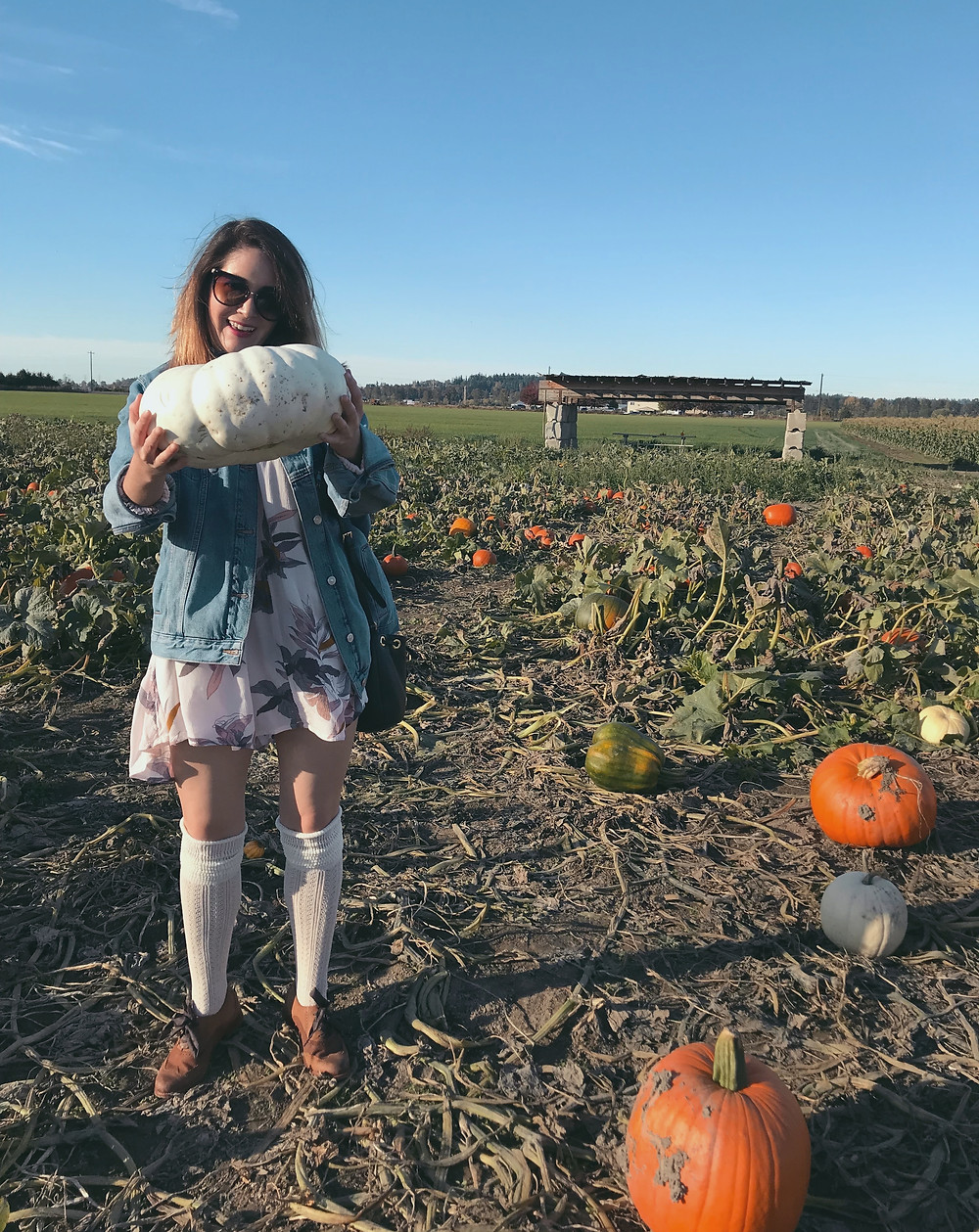 Pumpkin Patch | Sunburn in Seattle