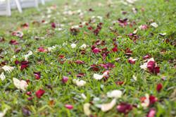 kristen flower petals.jpg
