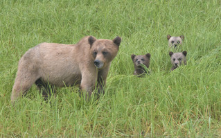 Blondie and her cubs.