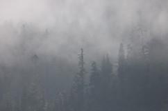 Mist in the rainforest.