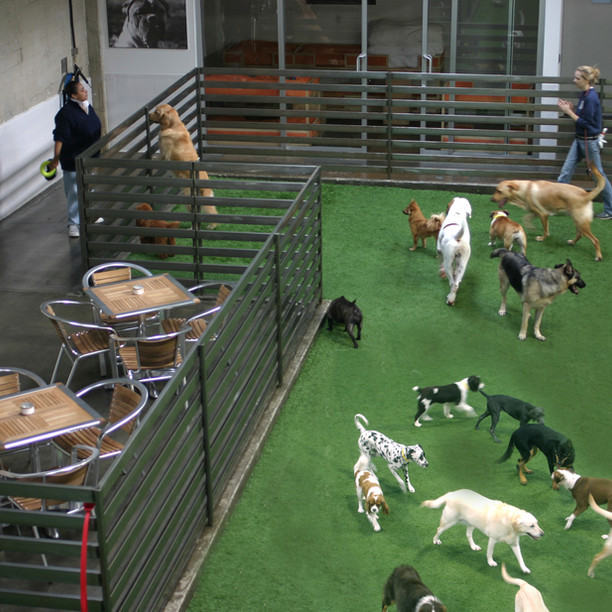Daycare, Kennel & Grooming