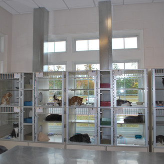 Gloucester-Mathews Humane Society