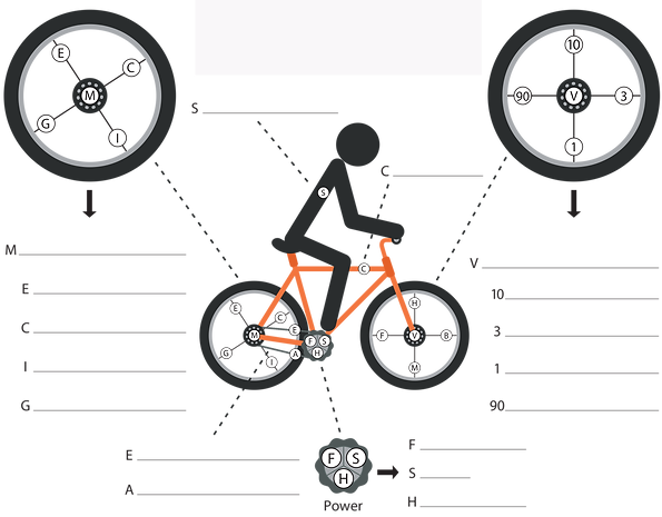 LIFECYCLE filled in copy.png