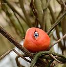 oogappel