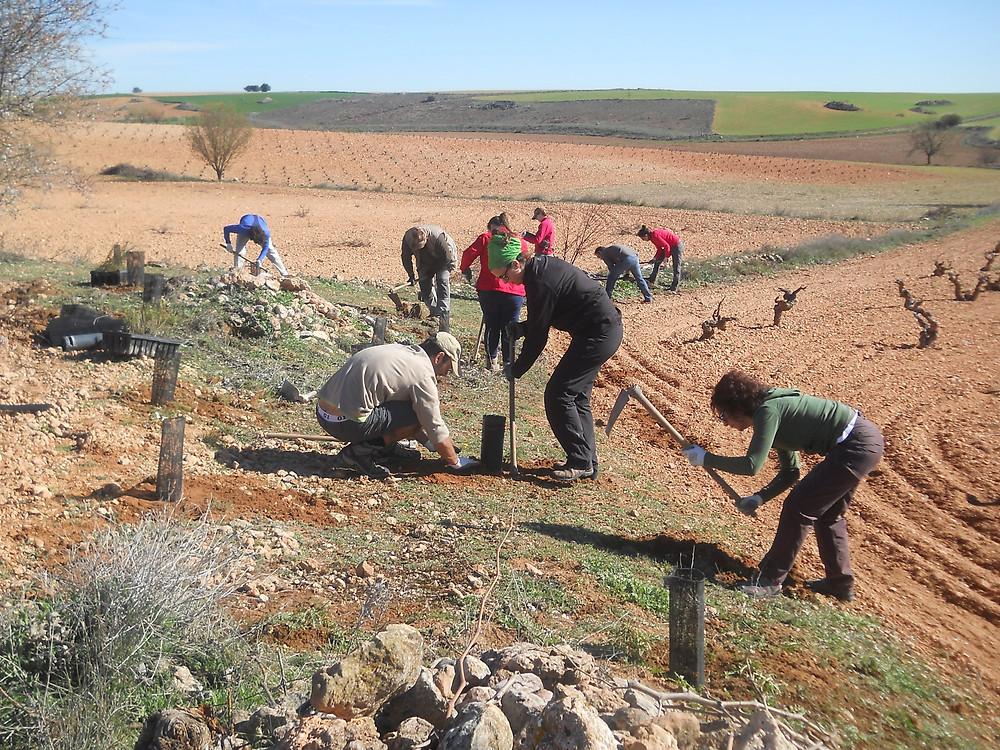 Voluntarios en plena plantación de linderos