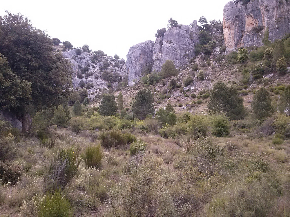 Hábitat de la Curruca Mirlona en la Sierra del Segura
