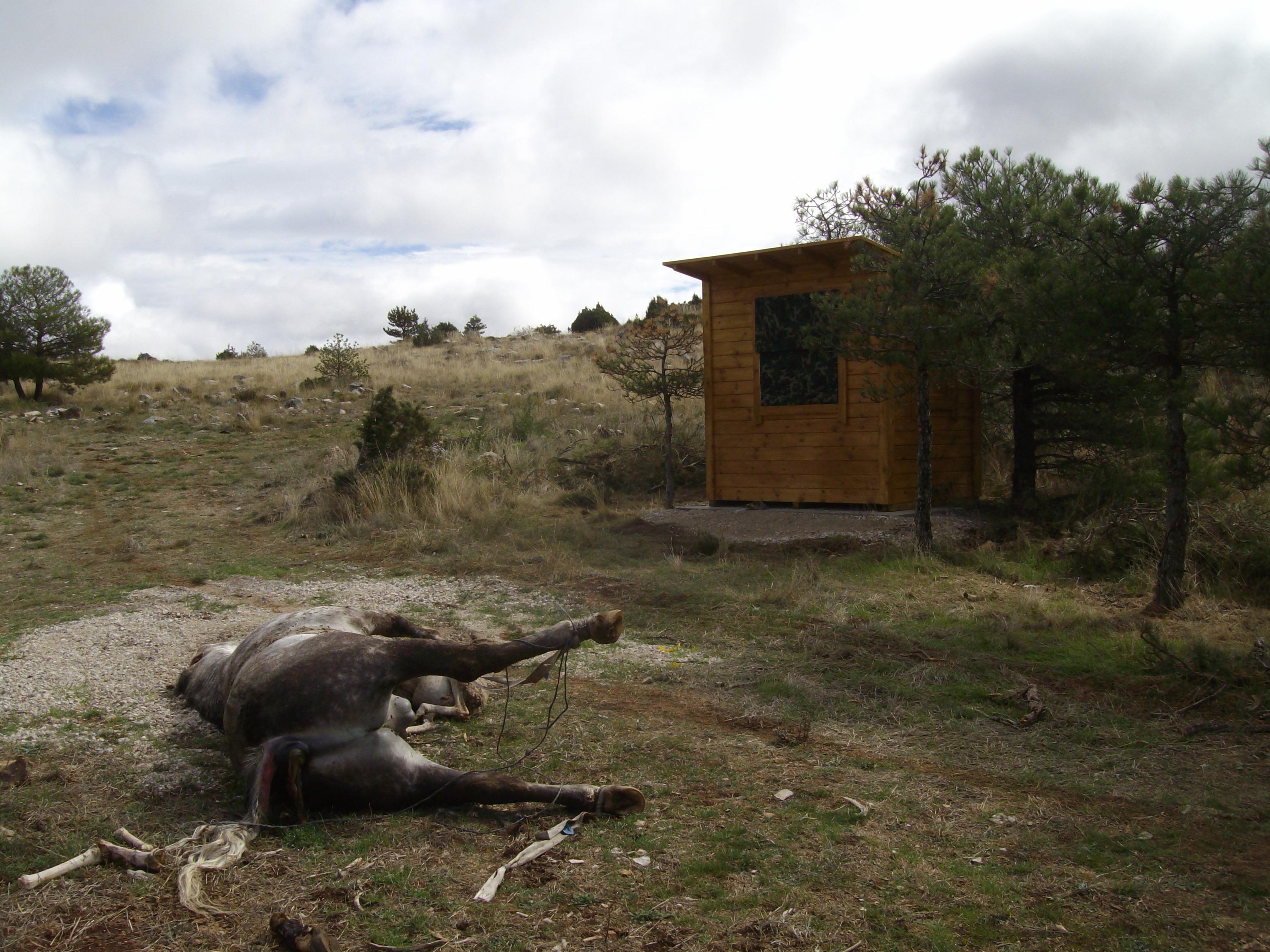 Carroña frente al hide