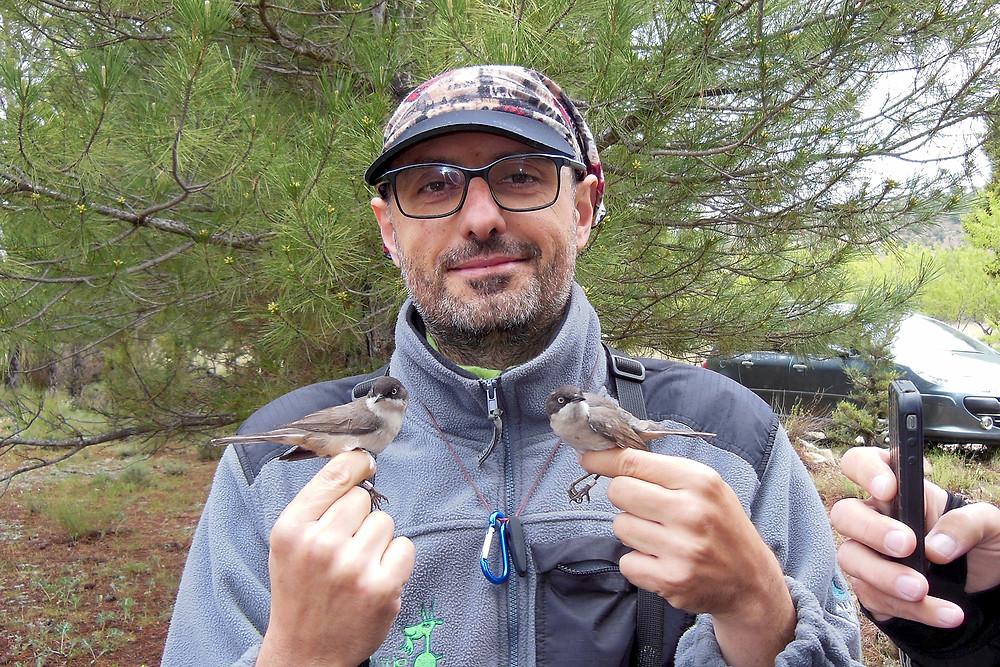 Uno de nuestros investigadores con dos ejemplares de curruca mirlona anillados en Nerpio