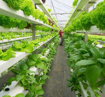 Topraksız Tarım: Gelecek Mi Yoksa Bugün Mü ?