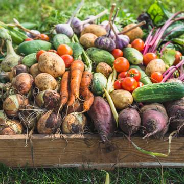 Azın Çokluk Olduğu Bir Mutfak Devrimi: Yeni Nordik Besin Hareketi