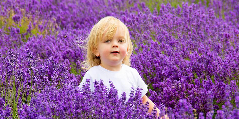 Lavender Field Shoot Day