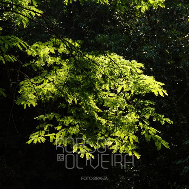 Flora-0072.jpg