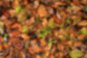 Flora-0103.jpg