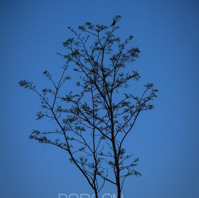 Flora-0074.jpg