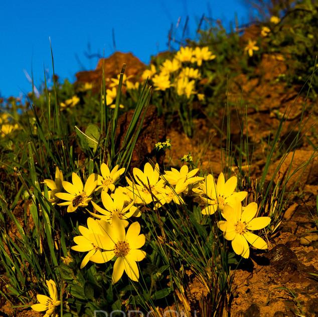Flora-0084.jpg