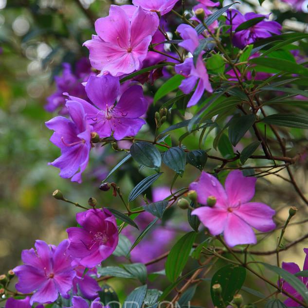 Flora-0087.jpg