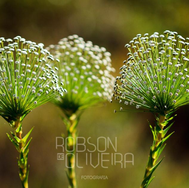 Flora-0069.jpg