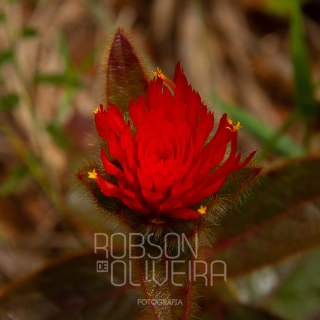 Flora-0094.jpg