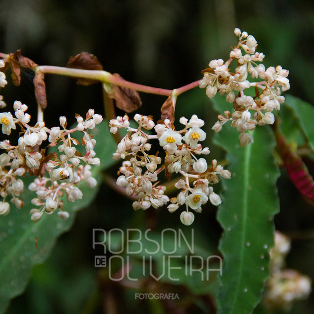Flora-0051.jpg