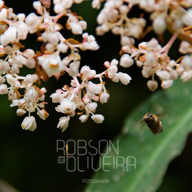 Flora-0052.jpg